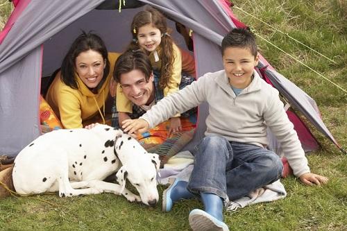 camping animal